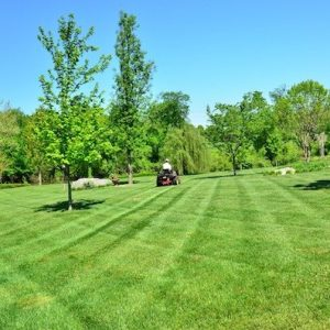lawn6