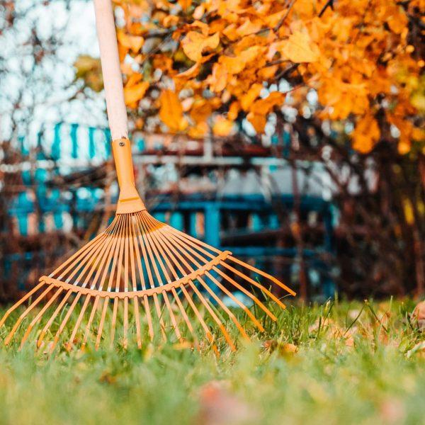 raking-fall-leaves-with-rake-in-the-yard-spring-cl-8Q6TDFP-min